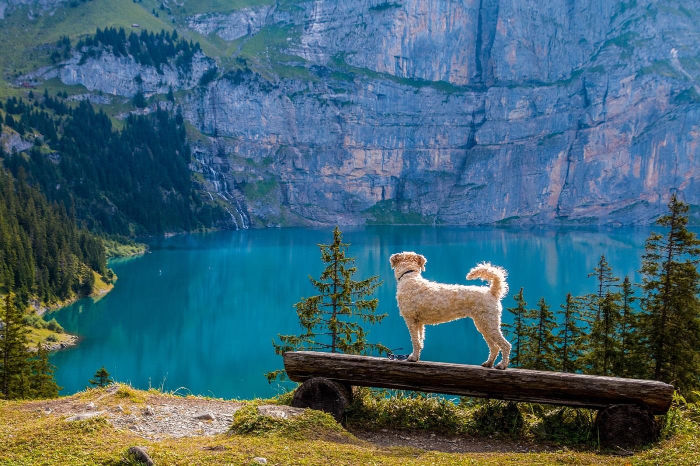 Urlaub mit Hund - INNs HOLZ